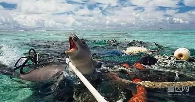 slat:清理海洋垃圾的荷兰阳光少年